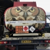 What A Hoot! Callow Owls Campaign